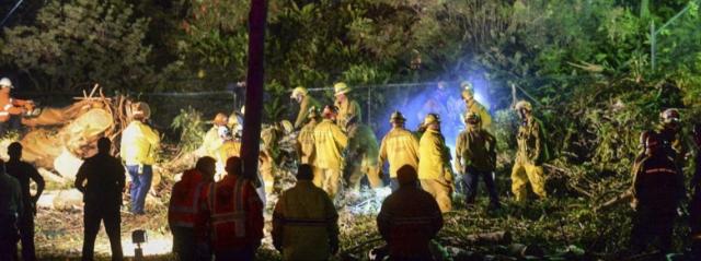 Tragedia durante un matrimonio in California. Cade un albero: 1 morto e 5 feriti