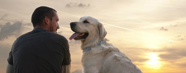 Lei lo lascia e lui si consola con il suo cane