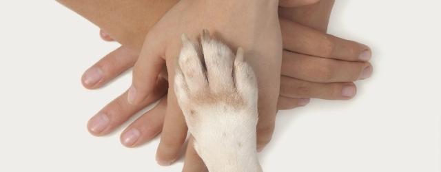 Pet therapy efficace anche contro le crisi di coppia