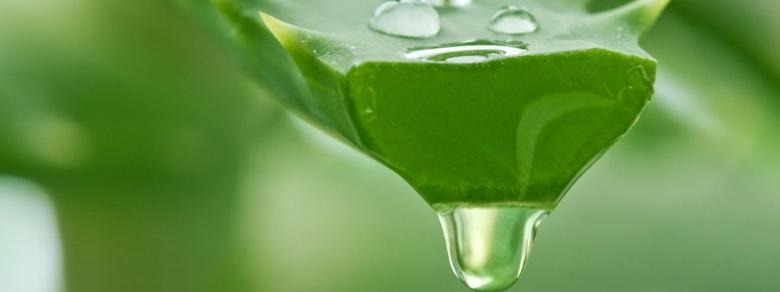 Aloe Vera, Proprietà, Benefici e Come Utilizzarla