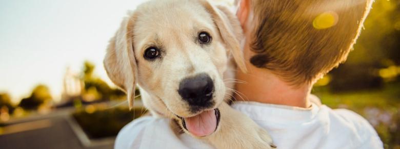 Cani da Adottare, Come Fare e Perché Accoglierli in Famiglia